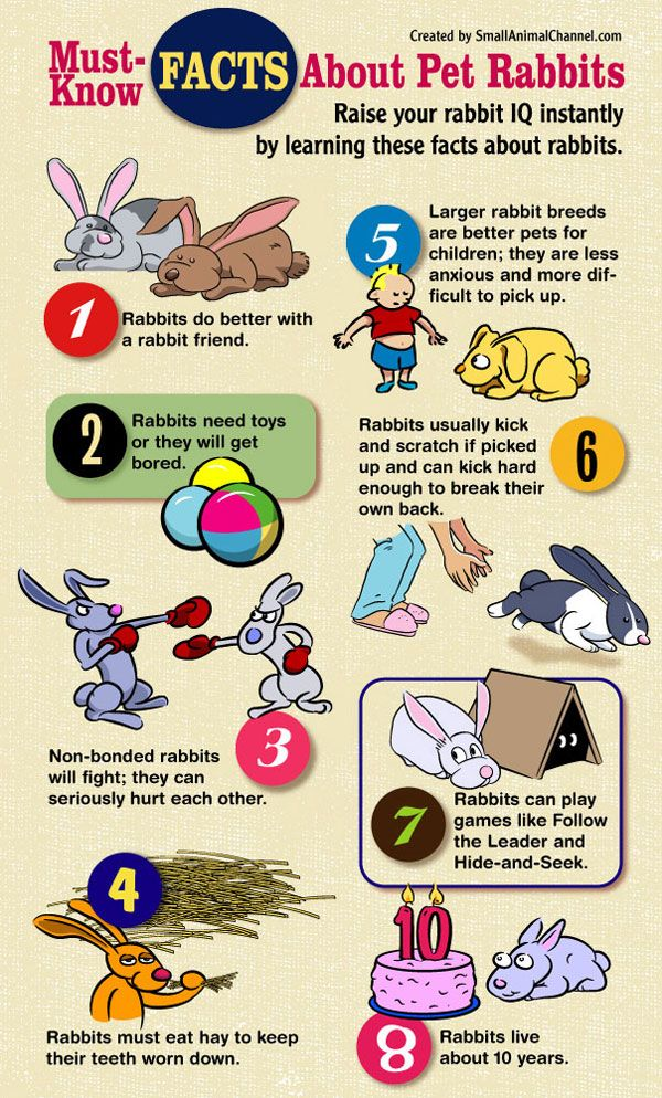 rabbit facts visit   spcafindapet   to view adoptable