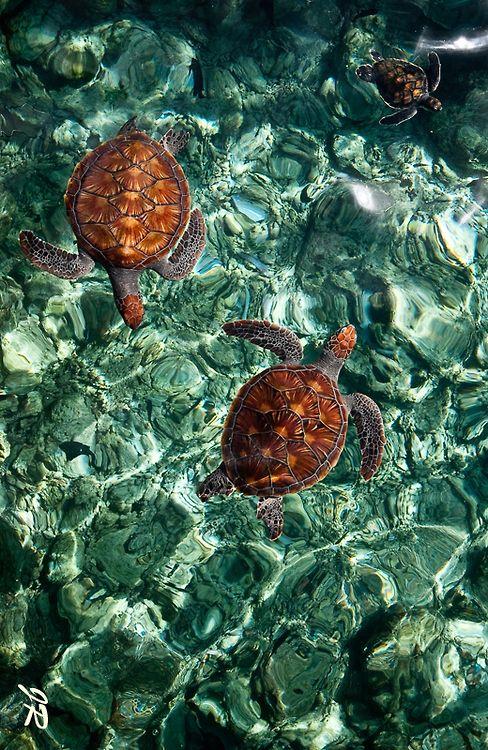 ~~Fragile Underwater World. Sea Turtles in the Maldives byJenny Rainbow~~