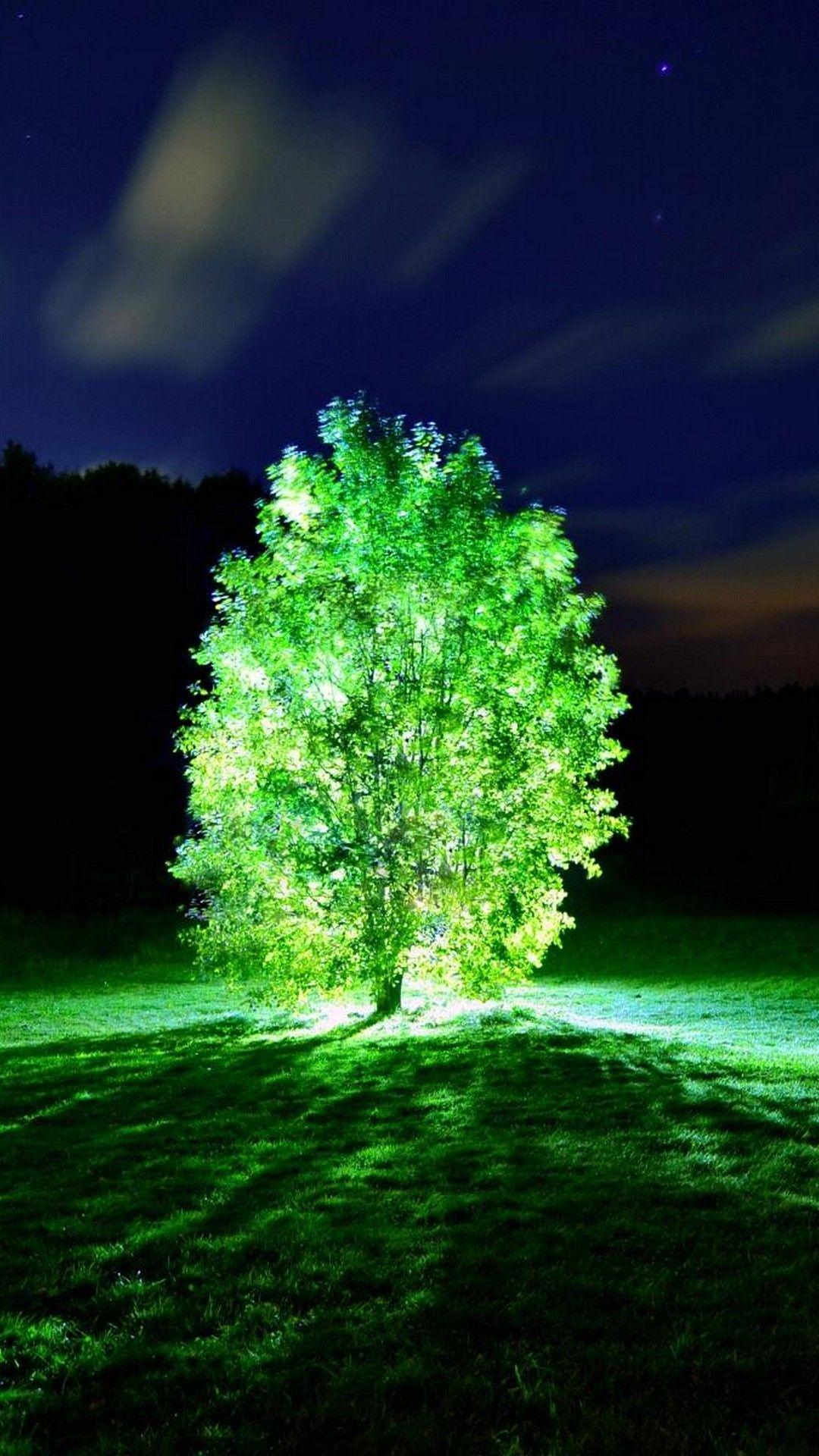 Trees Glowing In The Dark 壁紙 風景 木