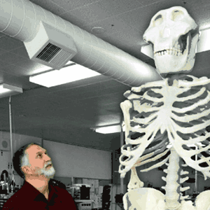 3d bigfoot skeleton