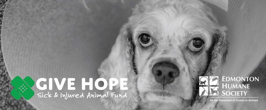Edmonton Humane Society Humane Society Society Online Fundraising