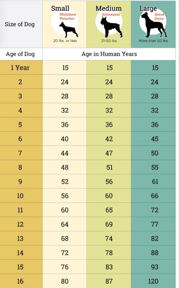 How Old Is Your Dog 2021