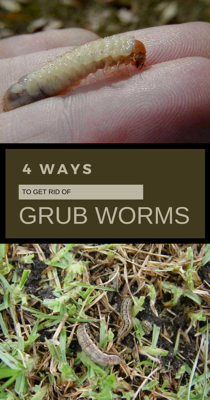 How To Get Rid Of Grub Worms In The Garden