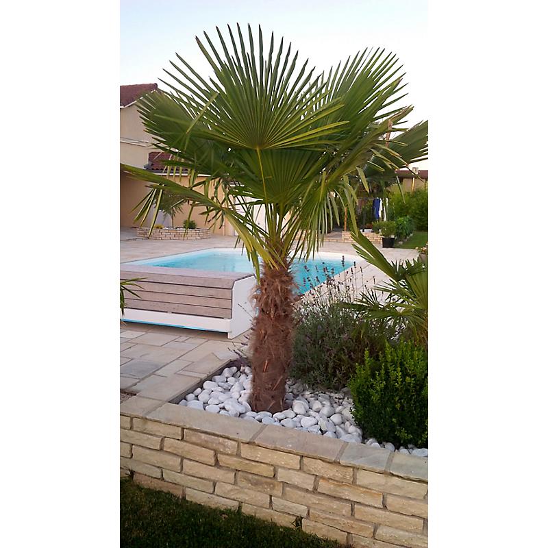 Palmier De Chine Chamaerops Excelsa 45 L Maison Et Loisirs E Leclerc En 2020 Jardin Moderne Decoration Jardin Paysagiste