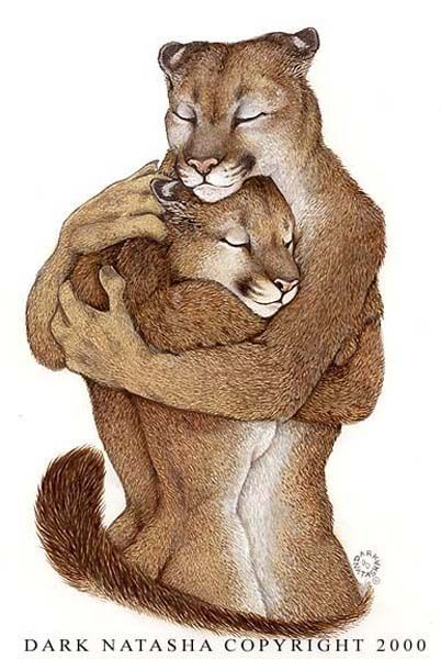 Pin By Kitsune Yokai On Ailuranthrope Furry Art Furry Drawing Art