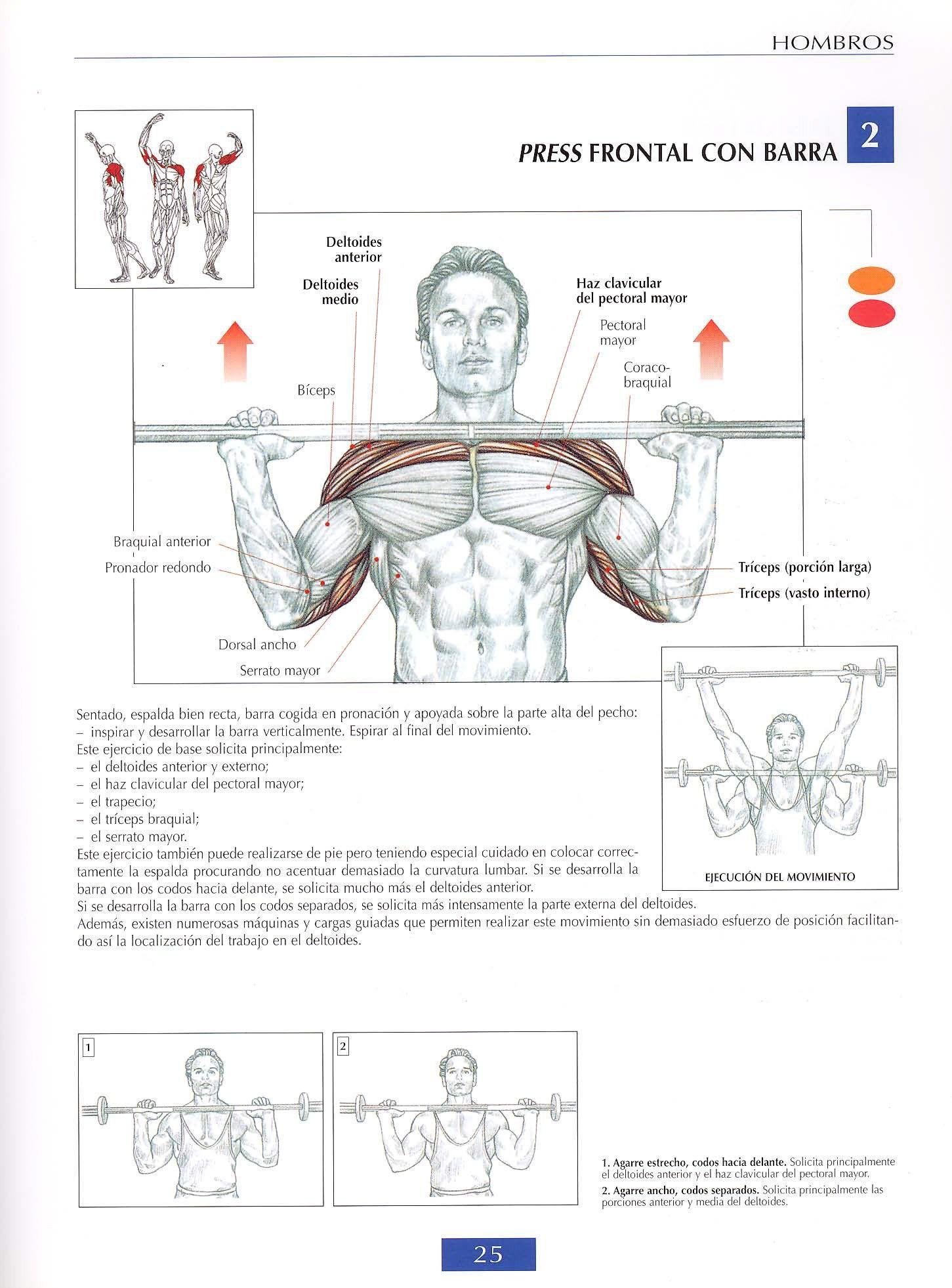 4BE.jpg (1451×1962) | Anatomía para referencia artistica | Pinterest ...