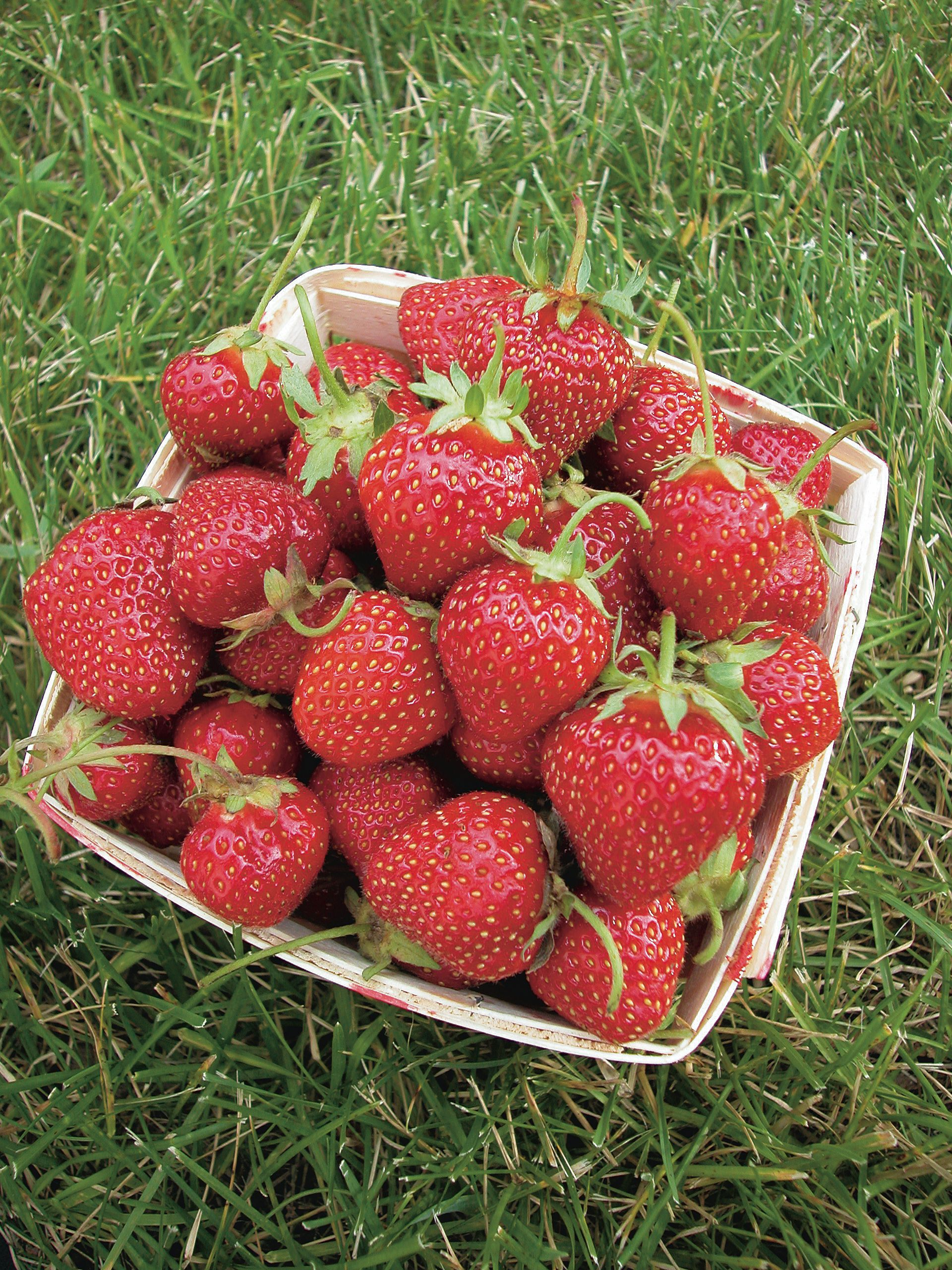 We have a sale going on right now on strawberry plants