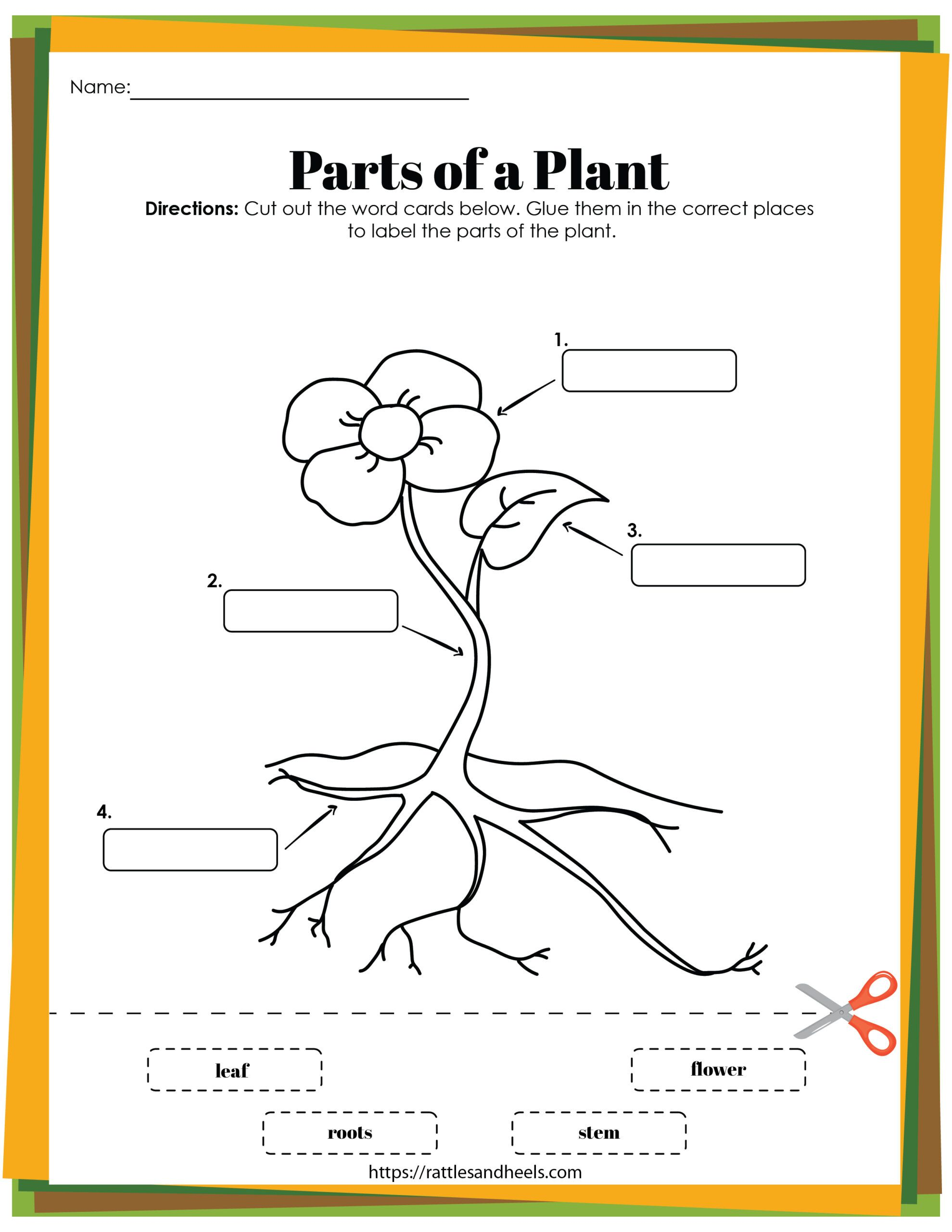 Plant Life Cycle Worksheets Free Printables For Kids Adanna Dill Plant Life Cycle Worksheet Plant Life Cycle Free Printable Worksheets