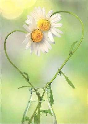 Daisy Heart Deluxe Matte Blank Note Card - Greeting Card by Avanti Press | eBay
