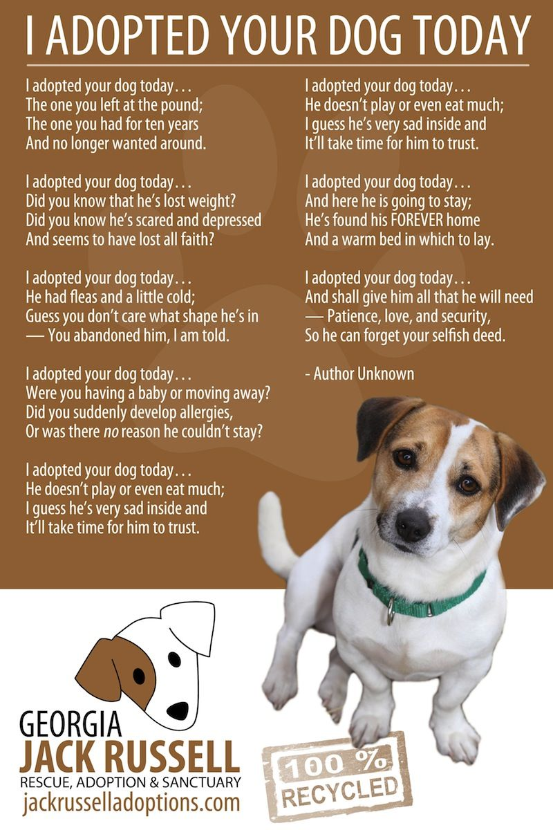 I Adopted Your Dog Today Rescue Dogs Your Dog Jack Russell