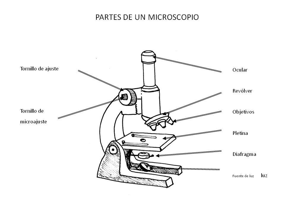 Microscopio Jpg 960 720 Microscopio Microscopio Dibujo Microscopio Optico