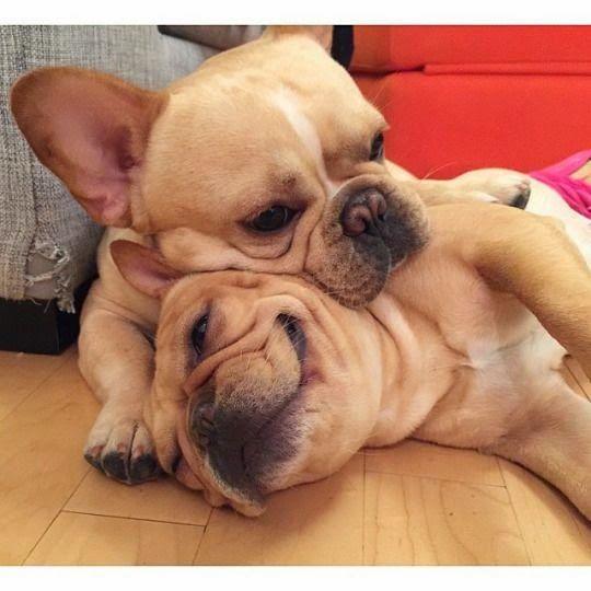 Top 10 Family Friendly Dog Breeds Cute Animals Friendly Dog
