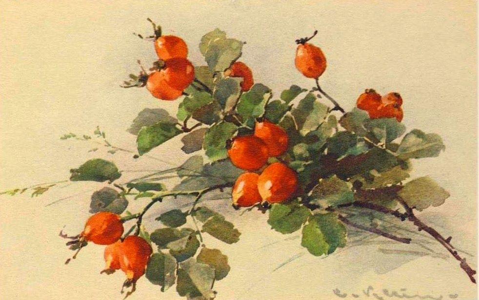 Открытки день, старинные открытки яблоки и цветы