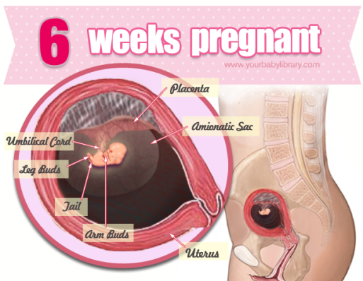 6 weeks 6 days pregnant