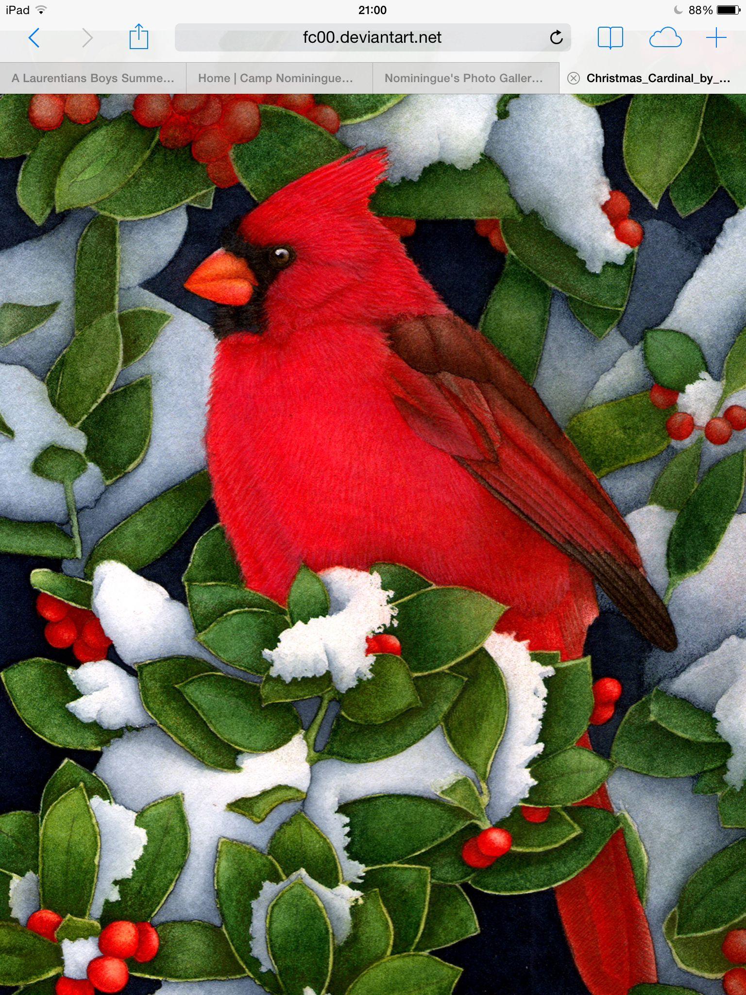 Cardenal Pajaros De Colores Aves Pajaros Pinturas De Aves