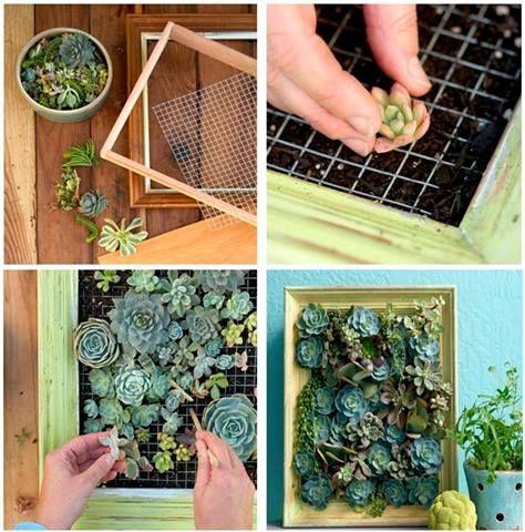 Preparar un peque o jard n vertical con suculentas es una for Jardin vertical pequeno