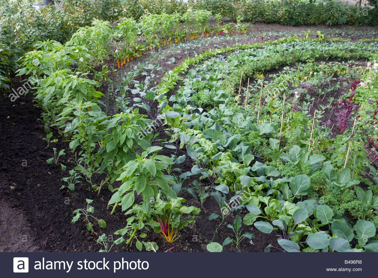 The vegetable garden the eden project cornwall potager for Ornamental vegetable garden design