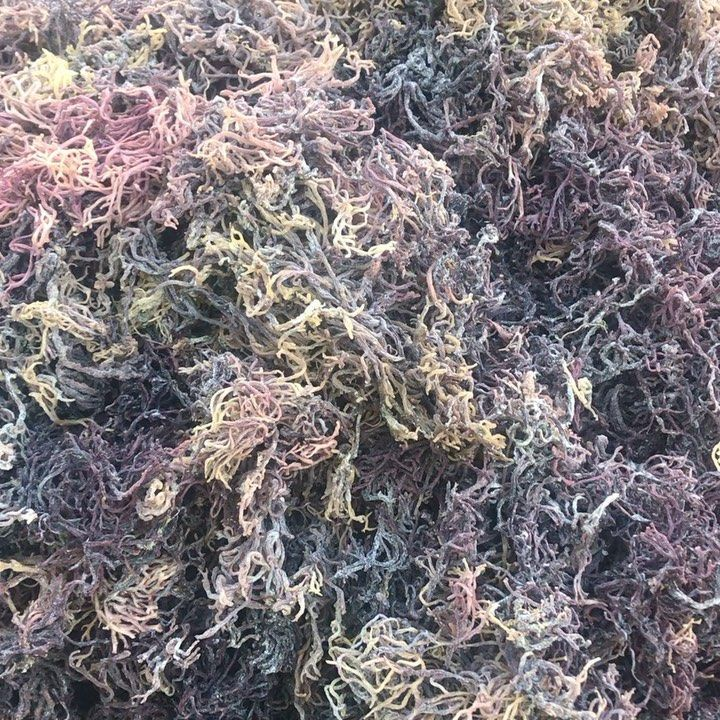 Yaga familyThe THICK Purple Gold Irish Sea Moss is now available in 2 4 8 and 16 oz sizes as well as a bulk 5... #irishsea Yaga familyThe THICK Purple Gold Irish Sea Moss is now available in 2 4 8 and 16 oz sizes as well as a bulk 5... #irishsea