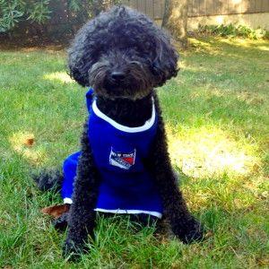 Let's Go Raengers! http://raeganhuston.com/lets-go-raengers/ #dogs #cute #party #hockey