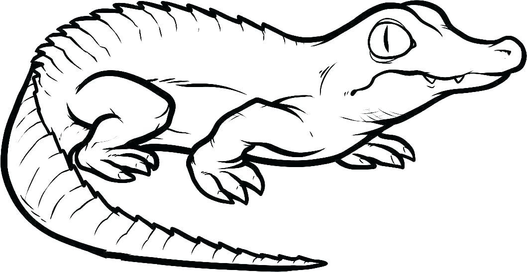 Reptile Coloring Pages Best Coloring Pages For Kids Animal Coloring Books Animal Coloring Pages Turtle Coloring Pages