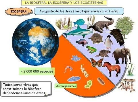 A Biosfera é o conjunto de todos os seres vivos que habitan a Terra. #Earth  #cells #water... | Seres vivos, Materiales didacticos, Colores