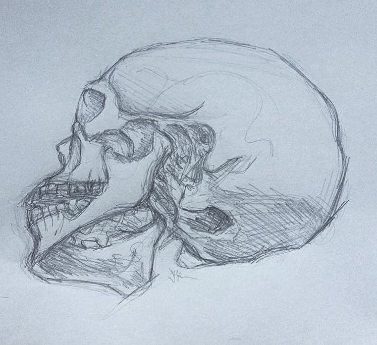 Schädel Anatomie Bleistift | Kunstspalte | Pinterest