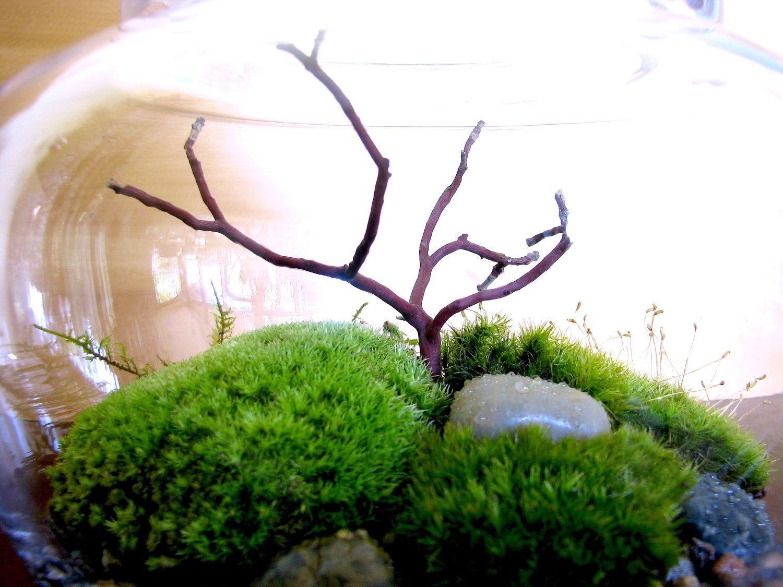 Charming Japanese Garden Terrarium Beautiful Garden Moss By TinyTerrains