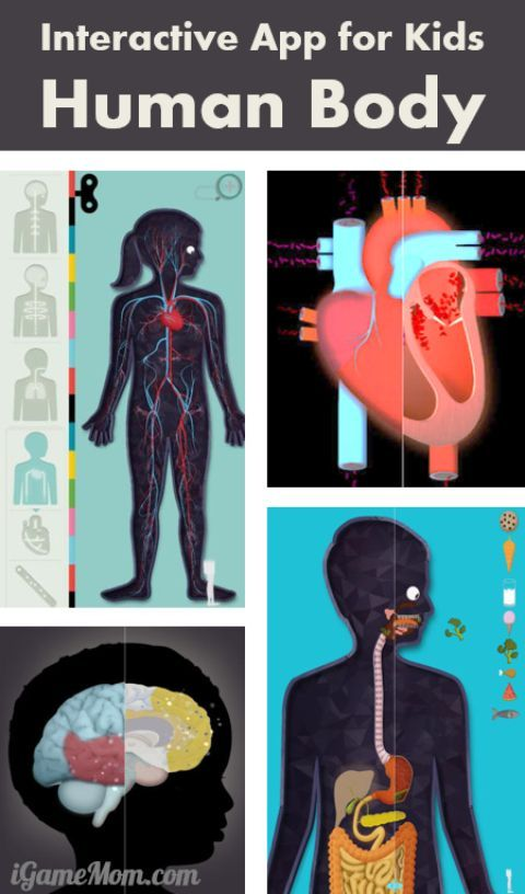 Wonderful App For Kids To Learn The Human Body Pinterest Human