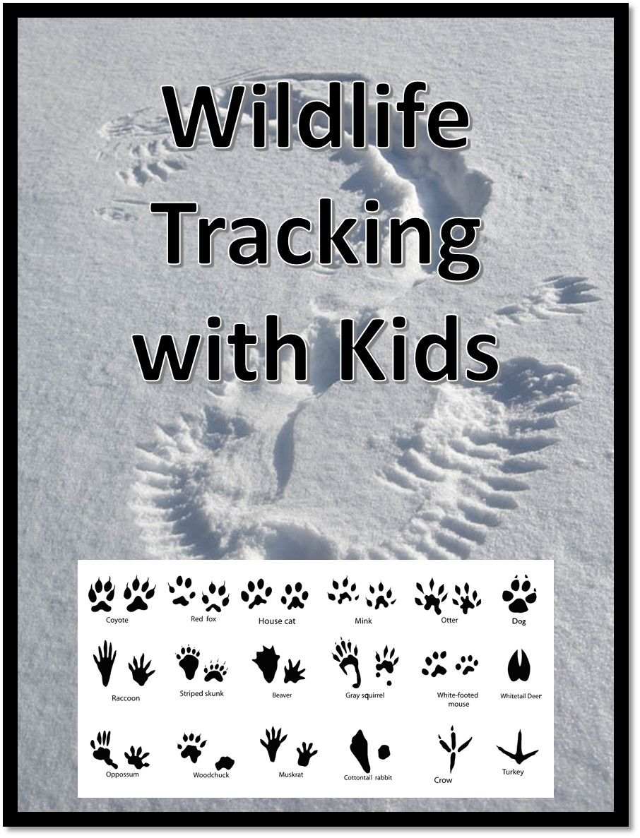 Need a fun winter activity? Check out this Intro to Wildlife Tracking with Kids!