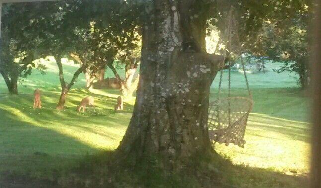Rådyr i hagen en tidlig morgen