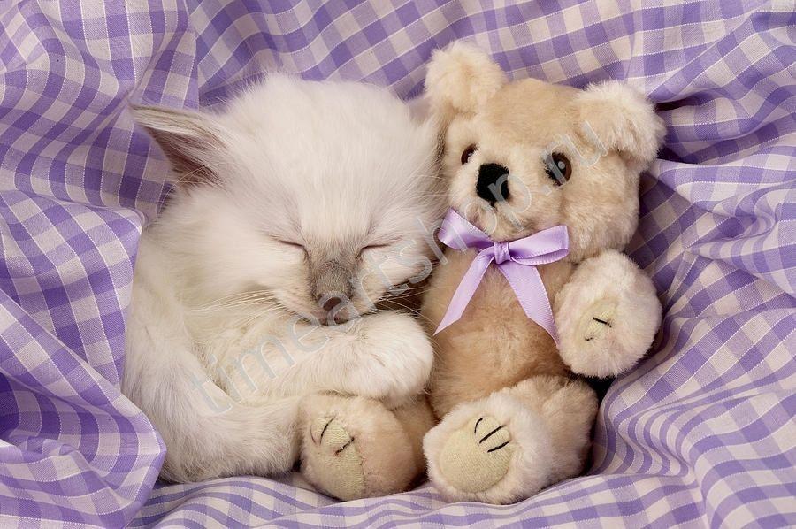 открытка с милыми животными лукбука кендалл