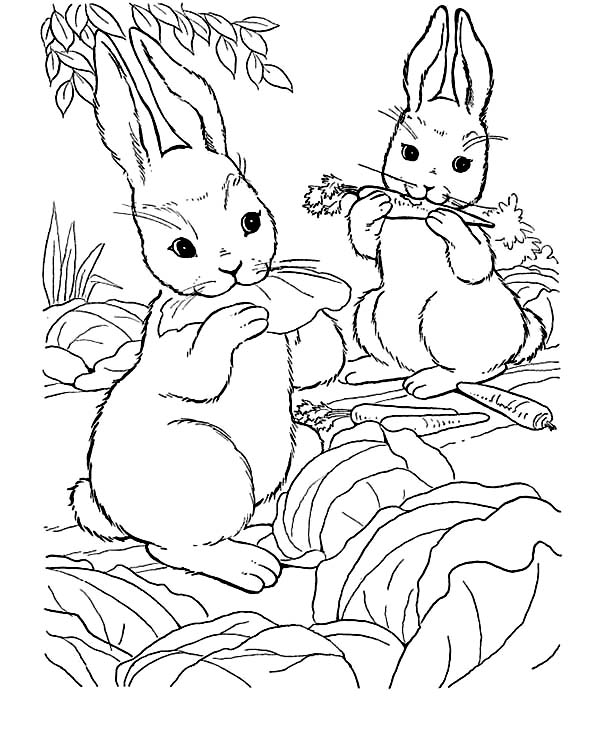 Rabbits Eating Carrot On Farm Animal Coloring Page Kids Play Color Farm Animal Coloring Pages Animal Coloring Pages Coloring Pages