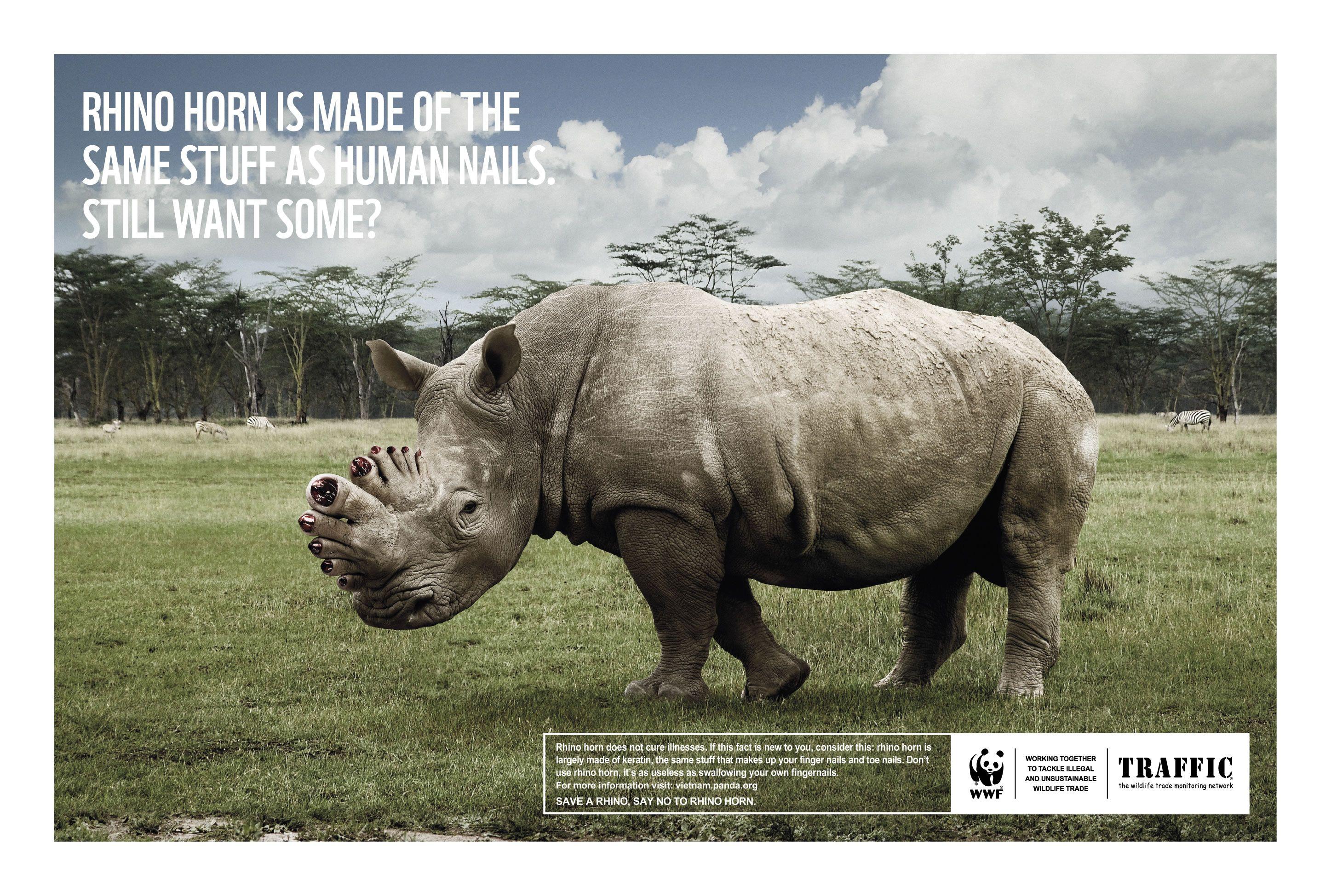 prada shoes karachi zoo rhinoceros 3d