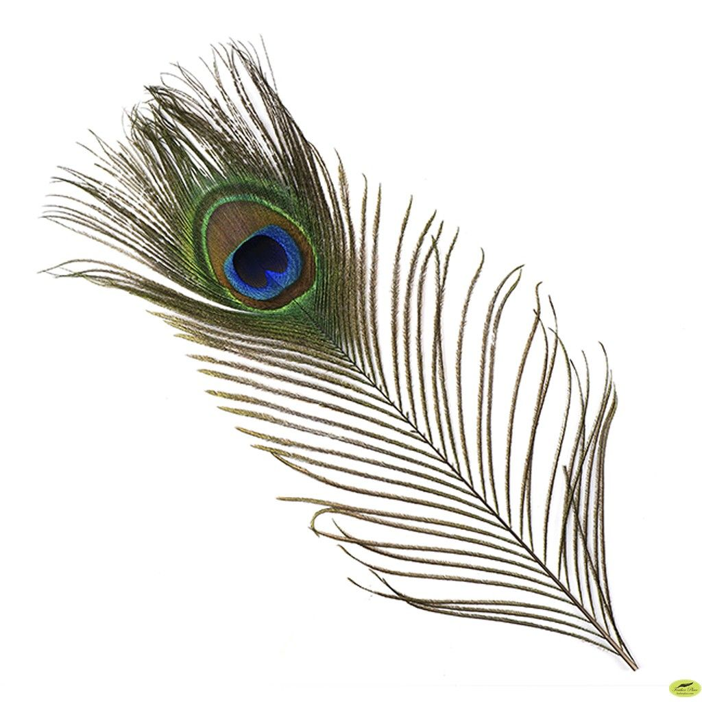 Peacock Feather Wallpapers And Backgrounds