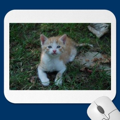 The mousepad of the curious kitty by catphoto