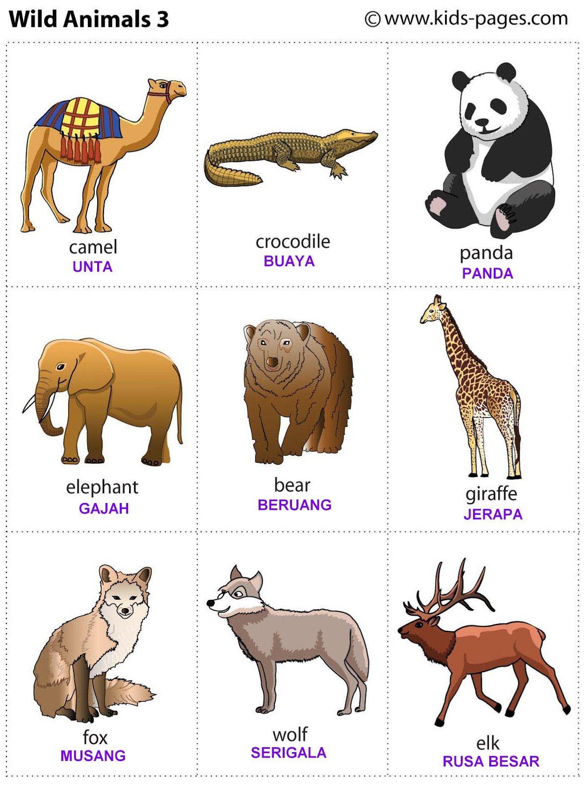 FLASHCARD INDONESIA Binatang buas, Binatang, Binatang ternak