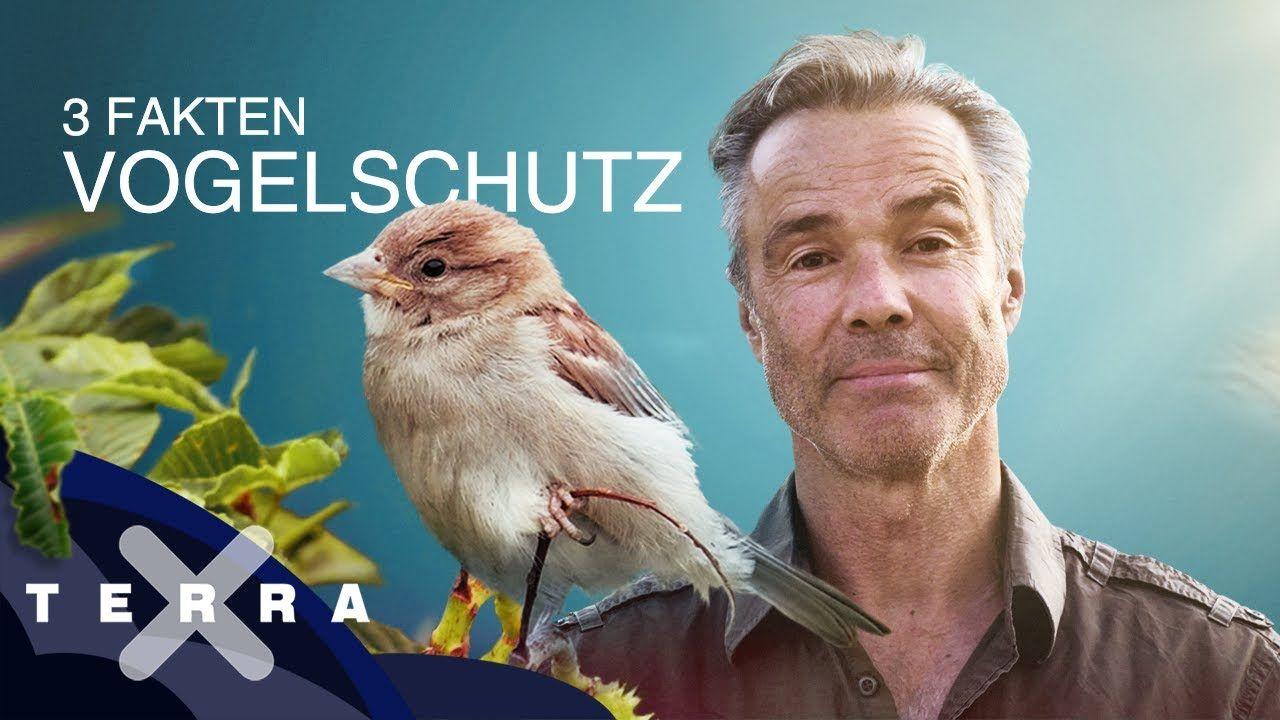 How to: 3 Fakten: wie geht Vogelschutz? | Hannes Jaenicke für Terra X #howtosing