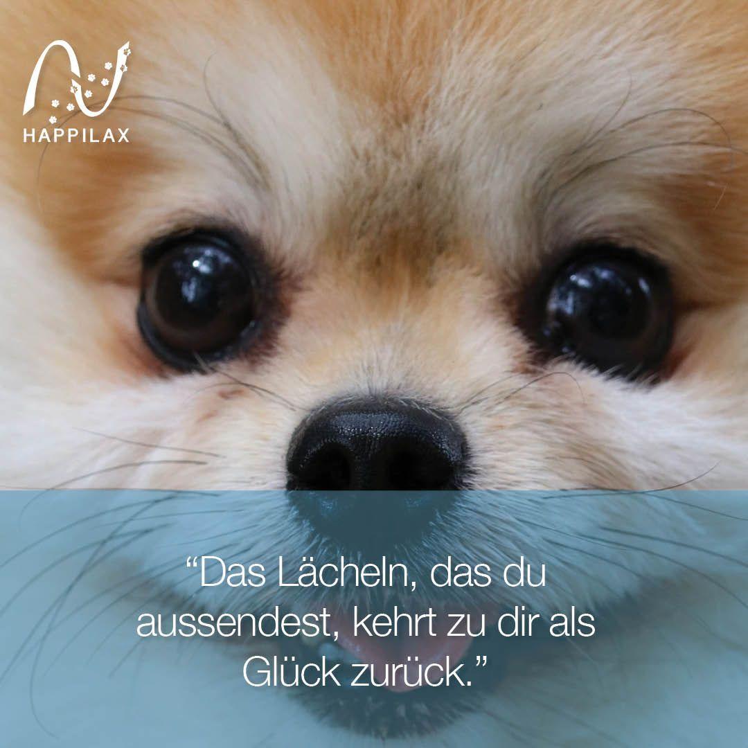 Schöne Hunde Zitate Das Lächeln Das Du Aussendest Kehrt