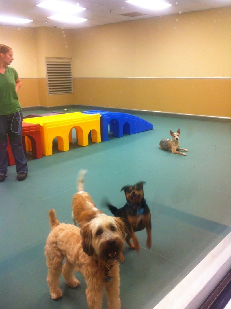 Dallas' new luxury dog hotel is probably nicer than your ...