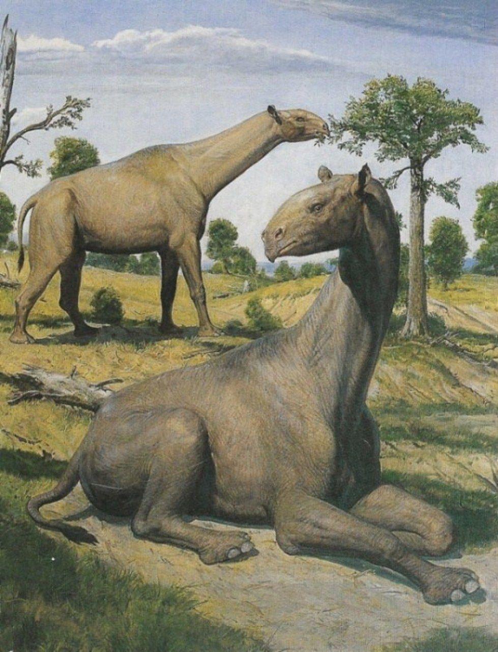 10 Ultra Cool Megafauna Giants #prehistoriccreatures