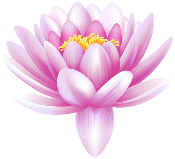 Water Lily Transparent PNG Clip Art Image Flower clipart