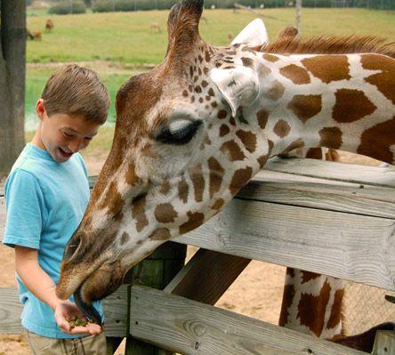 Metro Richmond Zoo Animal Experiences Animals Zoo