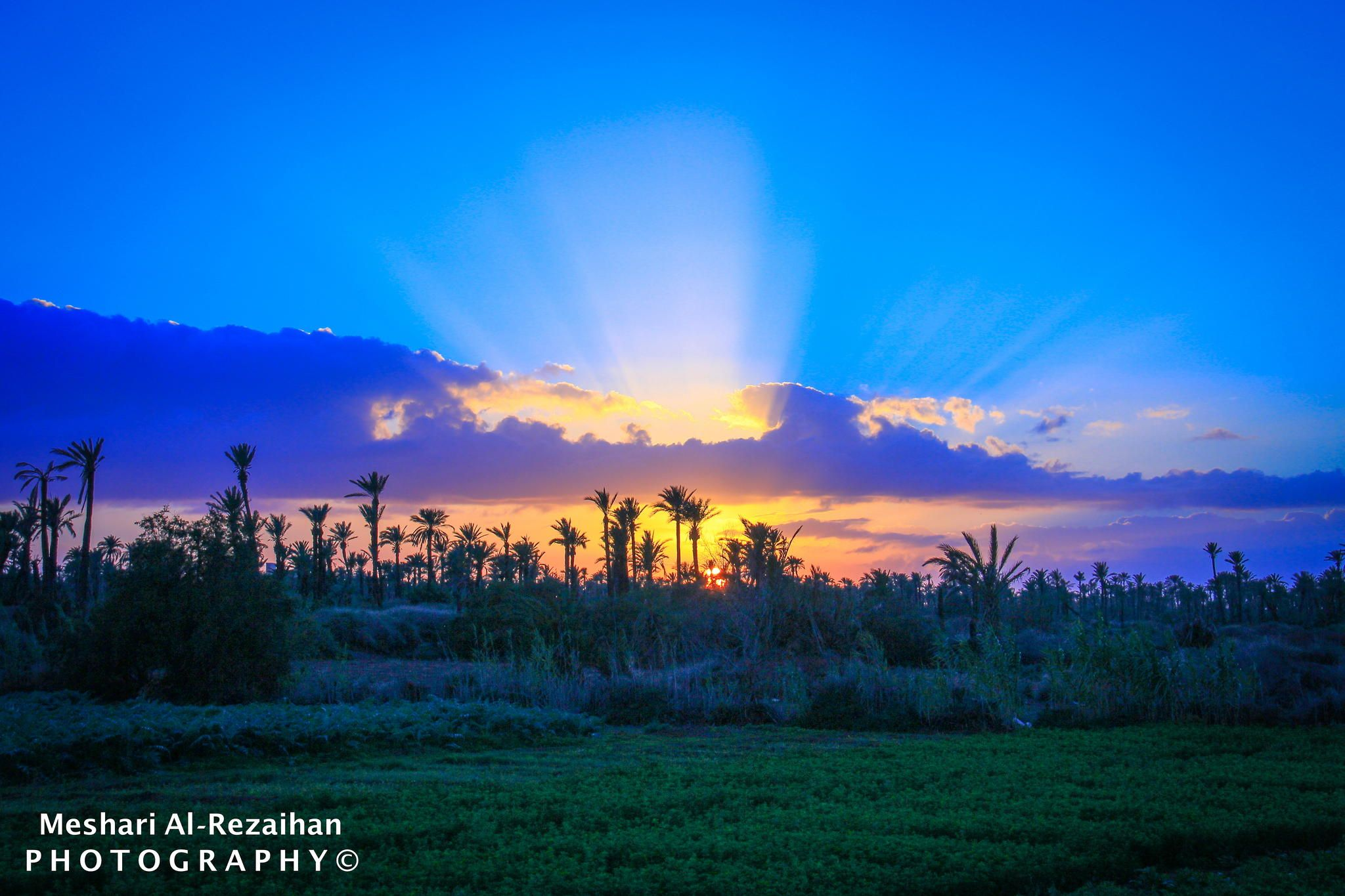 The Palm City by Meshari Al-Rezaihan on 500px