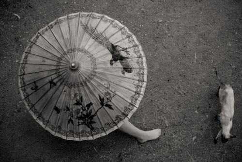 orient inspired http://findanswerhere.com/umbrellas
