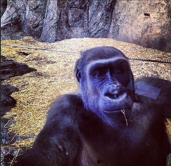 La mode des selfies se propage aux animaux !!!