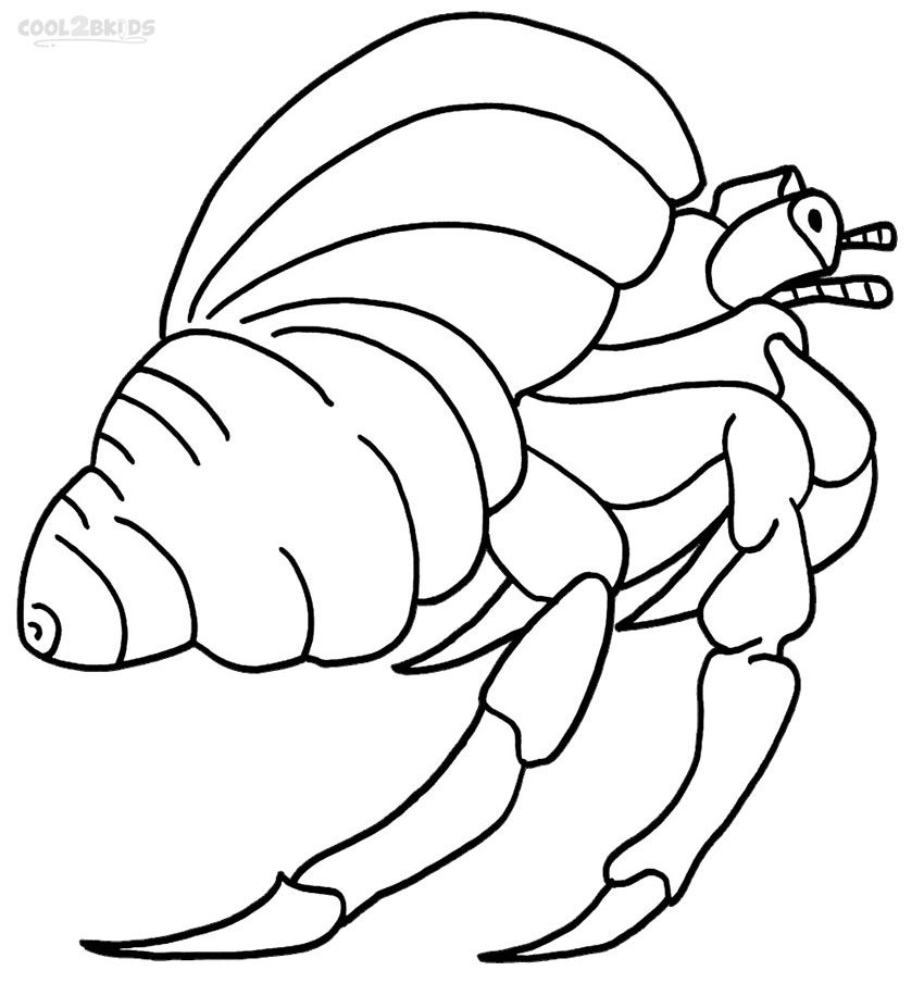 Hermit Crab Drawings Google Search Coloring Pages Animal
