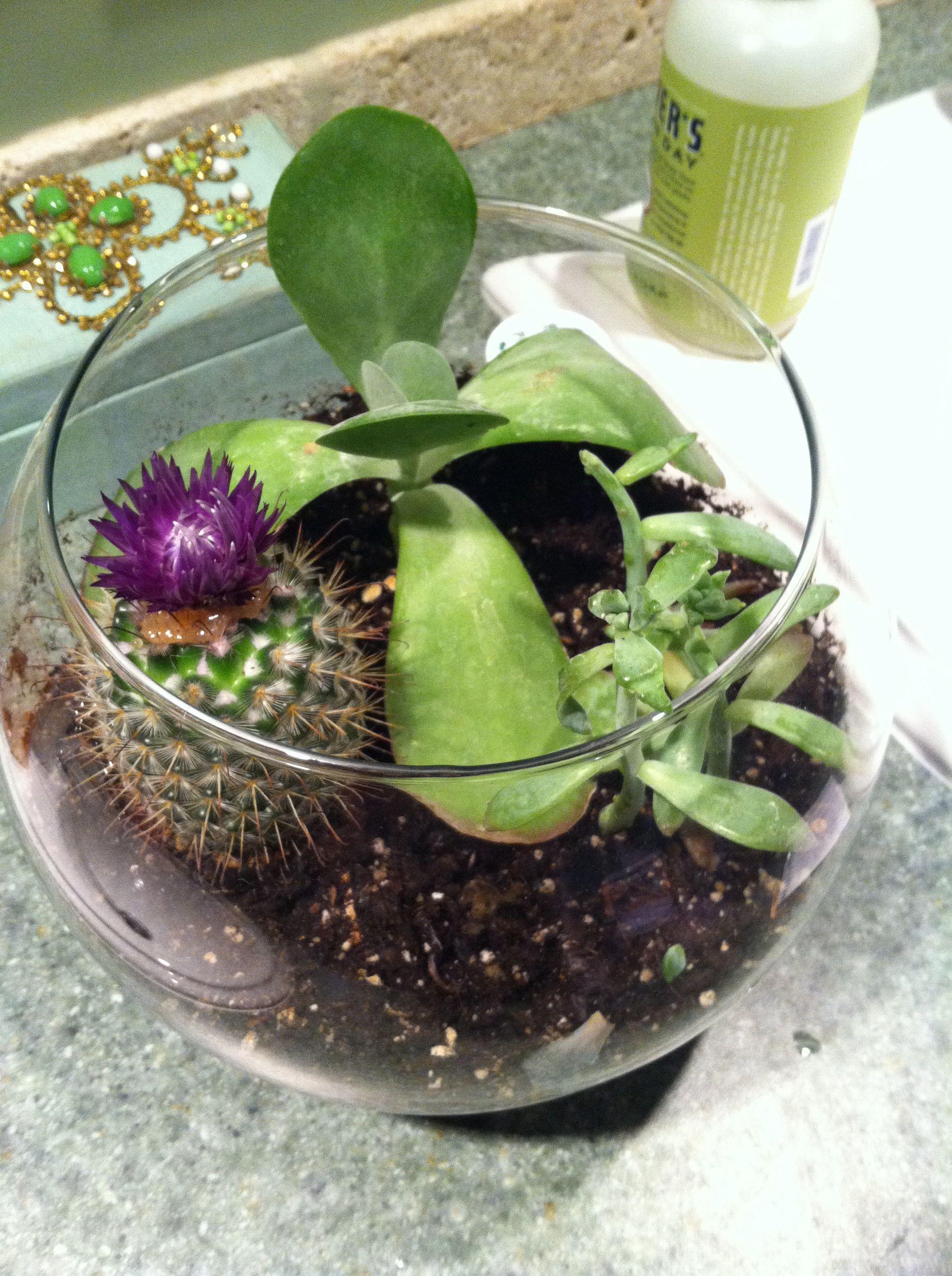 Diy Terrarium With A Fish Bowl Great Christmas Present