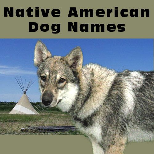 Pin By Amber Ridgeway On For The Love Of Pets Native American Dog Dog Names Native American Indian Dog