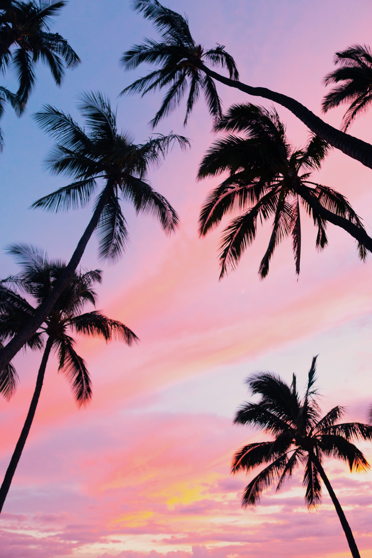 Sky Pink Sunset Hawaii Tropical Palm Tree Tree 5k Wallpaper Hdwallpaper Desktop Sunset Wallpaper Pink Sunset Hawaii Painting