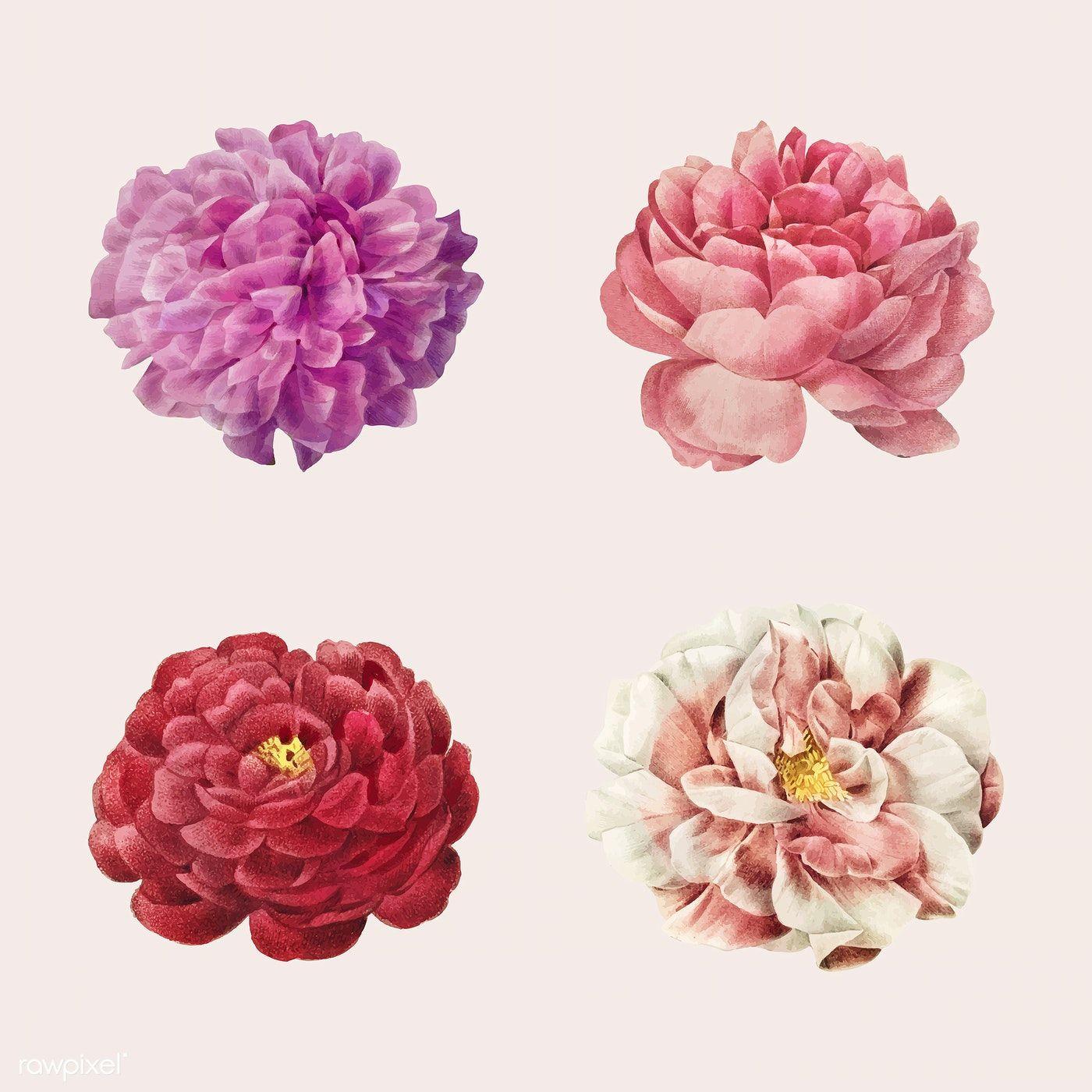 Download Premium Vector Of Vintage Rose Flower Vector Set 2253941 In 2020 Flower Illustration Flower Prints Art Rose Flower